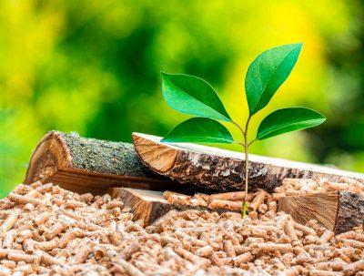 Día mundial del medio ambiente 2021: la sostenibilidad de la calefacción de biomasa